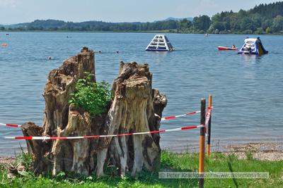 Baumwurzel am Ufer im Strandbad Neumarkt am Wallersee